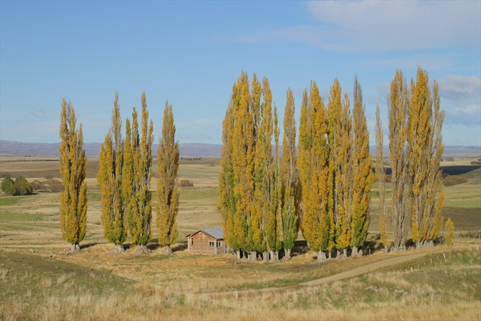 Otago Central Rail Trail Ida Valley Auripo