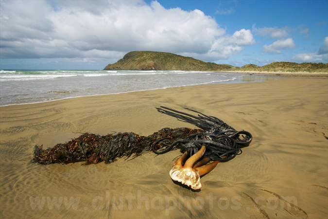 Cannibal Bay,The Catlins,South Otago,Clutha District